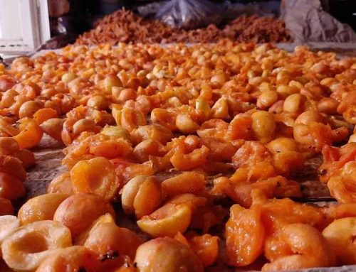 وکیوم در صنایع غذایی